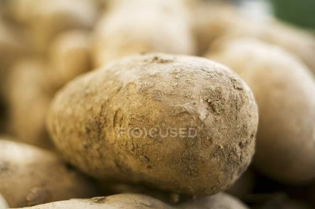 Haufen von rohen Kartoffeln sauber — Stockfoto