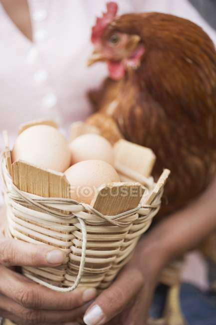 Eggs and live hen — Stock Photo