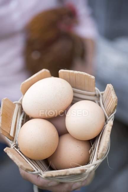 Huevos y gallinas vivas - foto de stock