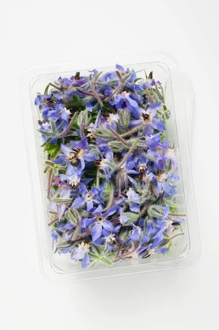 Вид сверху огуречника цветов в пластиковый лоток — стоковое фото