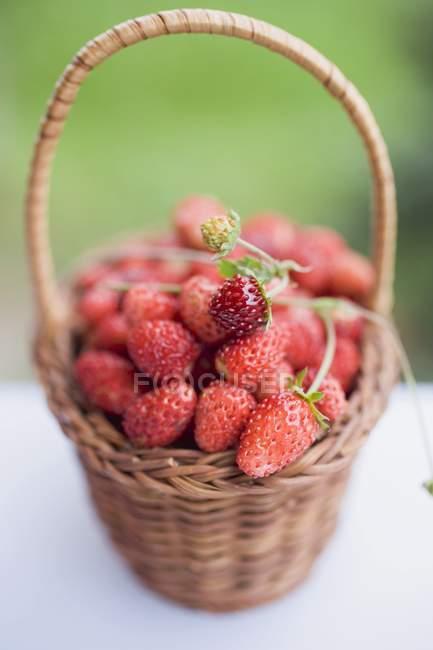 Fresas silvestres frescas maduras - foto de stock