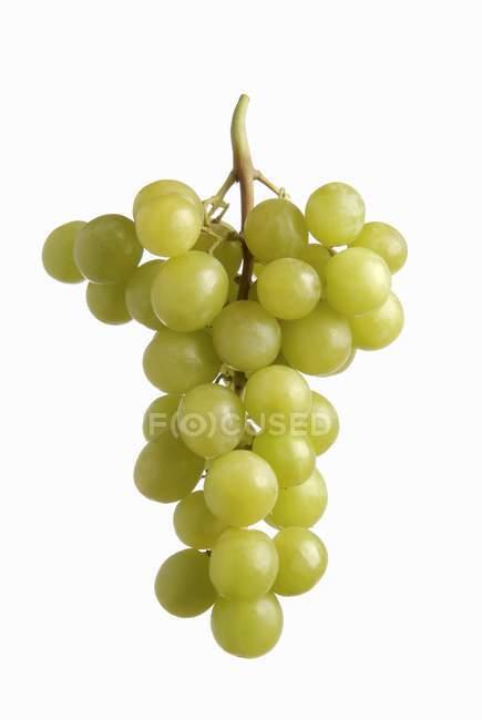 Ripe Green grapes — Stock Photo