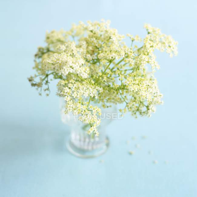 Elevated view of elderflowers in glass vase on blue background — Stock Photo