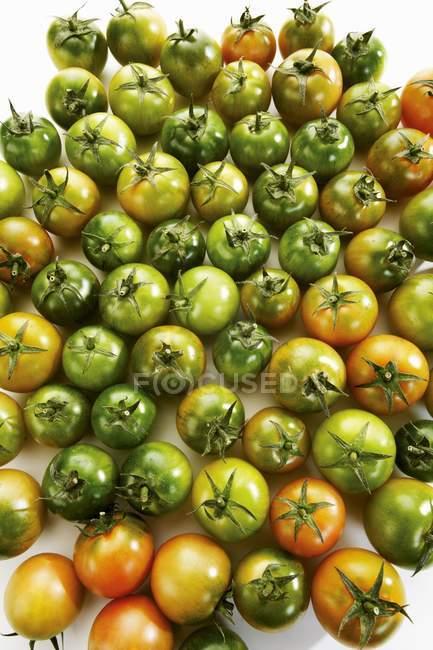 Незрілі зелені помідори — стокове фото