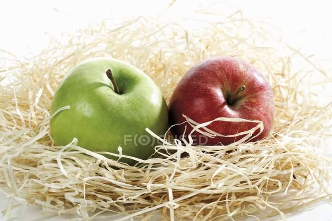 Deux pommes dans le nid — Photo de stock