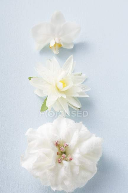 Closeup view of three different white flowers on blue surface — Stock Photo