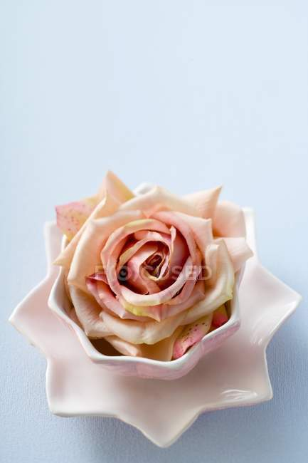 Cut rose flower head in pink bowl on blue surface — Stock Photo