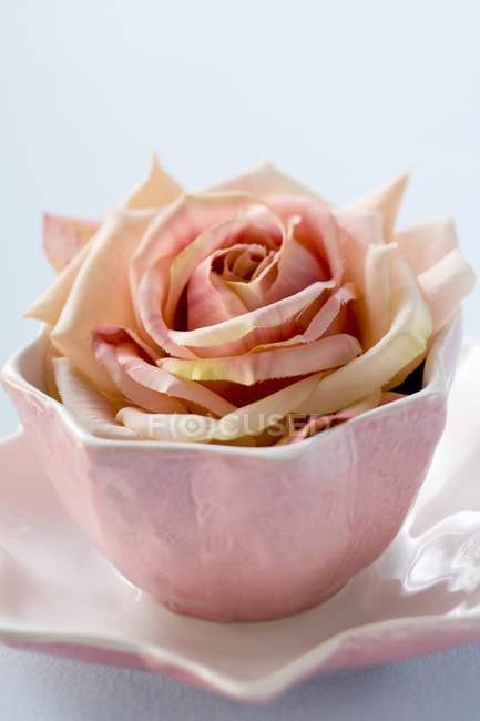 Closeup view of one cut rose in pink bowl on saucer — Stock Photo