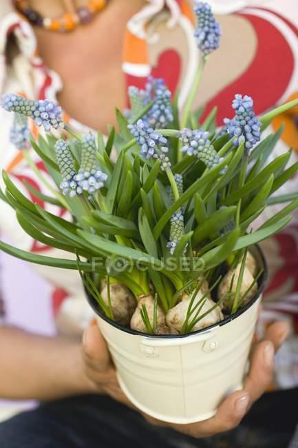 Closeup vista de mulher segurando o balde de hyacinths de uva — Fotografia de Stock