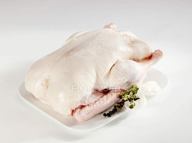 Raw fattened duck — Stock Photo