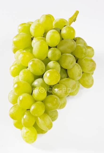 Reife grüne Trauben — Stockfoto