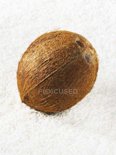 Frische reife Kokosnuss — Stockfoto