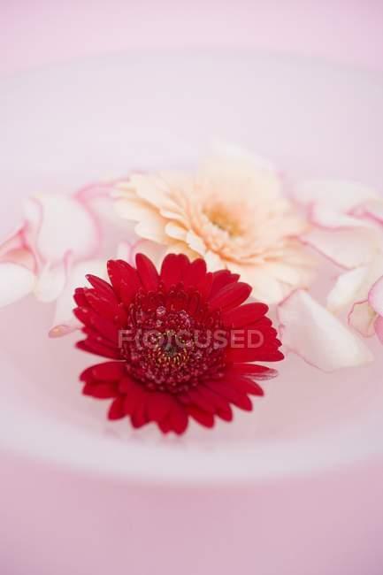 Крупним планом подання з пелюстків троянд і Гербера в миску води — стокове фото