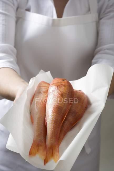 Frau hält frische Rotbarbe in der Hand — Stockfoto