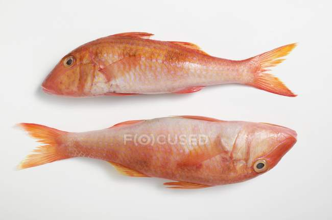 Fresh raw red mullet — Stock Photo