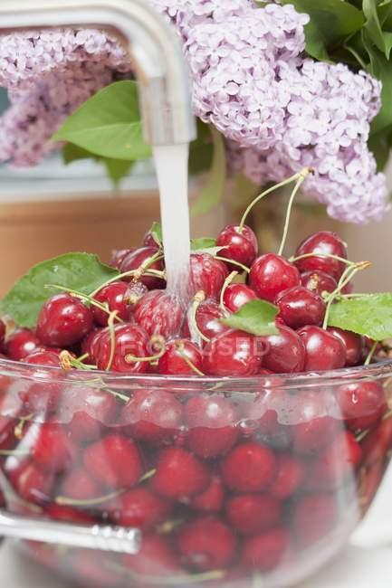 Cherries washed under running water — Stock Photo