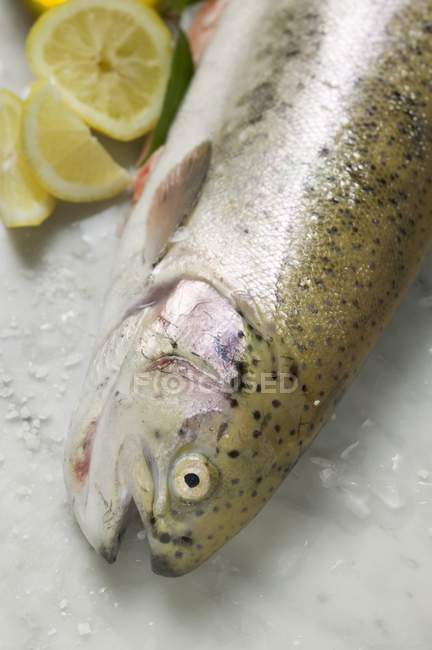 Fresh salmon trout — Stock Photo