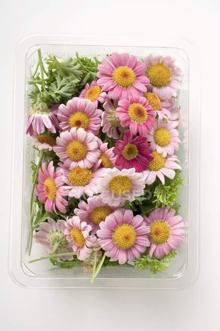 Вид зверху зрізаних квітів у пластиковий лоток — стокове фото