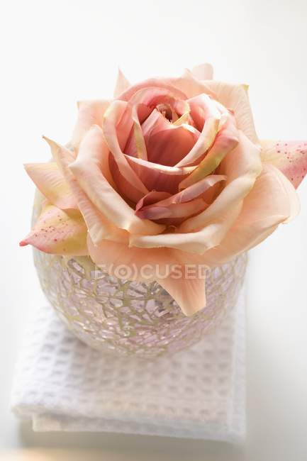 Вид крупним планом рожеві троянди в windlight на білий рушник — стокове фото