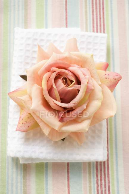 Elevated view of one pink rose on white towel — Stock Photo