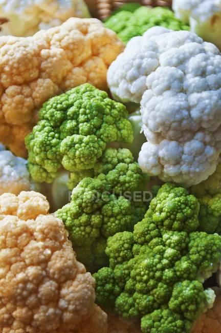 Зеленый оранжевый и белый цветная капуста — стоковое фото