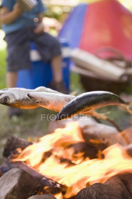 Detailansicht der Fisch über Lagerfeuer Grillen — Stockfoto