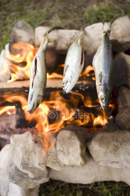 Grillen Fisch über Lagerfeuer — Stockfoto