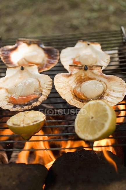 Detailansicht von Jakobsmuscheln und Zitrone Stücke auf Grill — Stockfoto