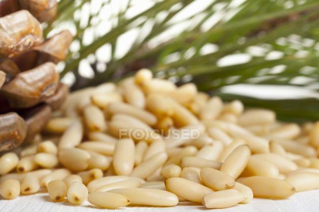 Кедрові горіхи в купи — стокове фото