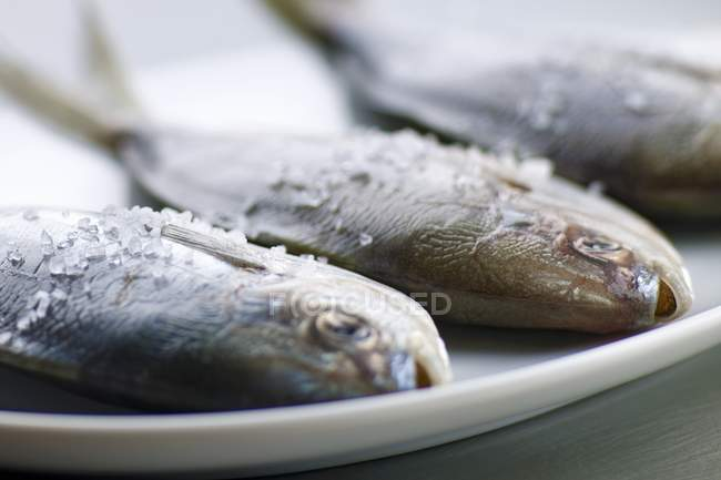 Butterfish on Platter with Sea Salt — Stock Photo