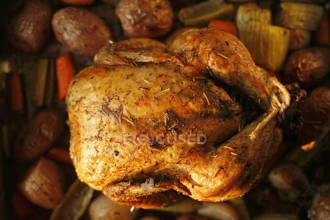 Whole Roasted Chicken with Herbs — Stock Photo