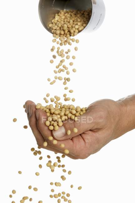 Mains humaines versant des fèves de soja — Photo de stock