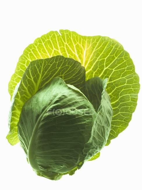 Зеленые спелые капуста — стоковое фото