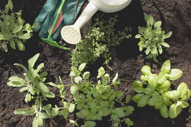 Top view of garden utensils and plants in soil — Stock Photo