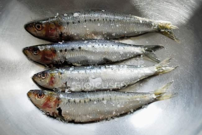 Sardines fraîches saupoudrés de sel — Photo de stock