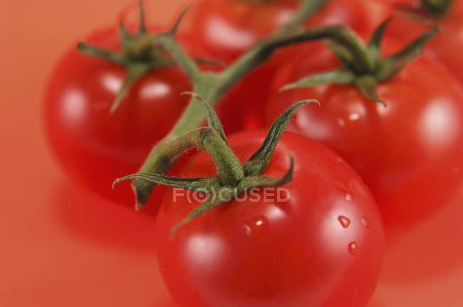 Several tomatoes on vine — Stock Photo