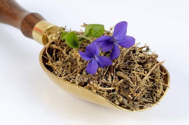Raíces violetas y violetas en una cucharada - foto de stock