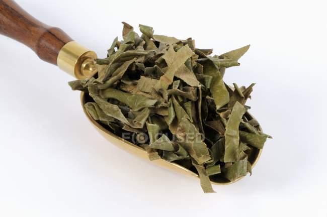 Secchi foglie di Nespolo del Giappone in una paletta — Foto stock