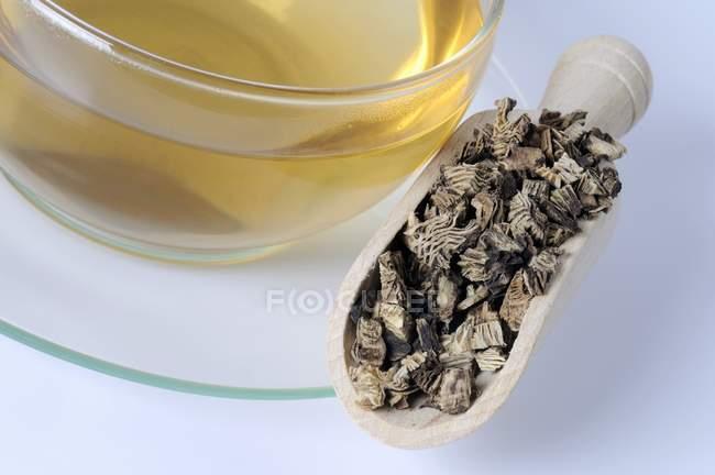 Tazza di tè con radice di cohosh nero essiccato — Foto stock