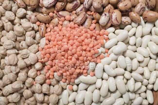 Borlotti und weiße Bohnen mit Kichererbsen — Stockfoto