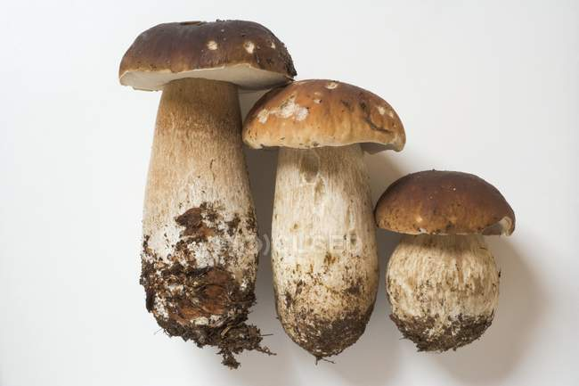 Three ceps side by side — Stock Photo