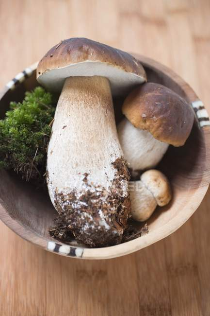 Fresh ceps with moss — Stock Photo