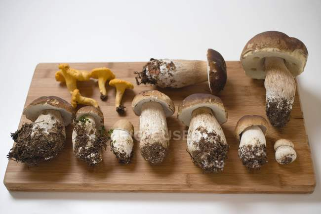 Rebozuelos y ceps frescos - foto de stock