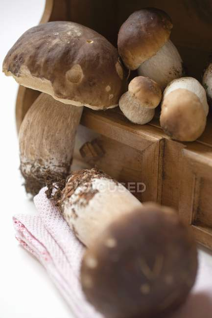 Fresh ceps on drawer unit — Stock Photo