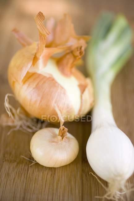 Diferentes tipos de cebollas - foto de stock