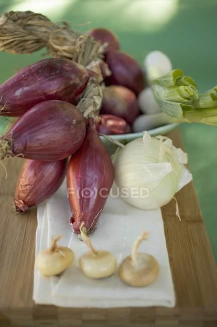 Varios tipos de cebollas - foto de stock