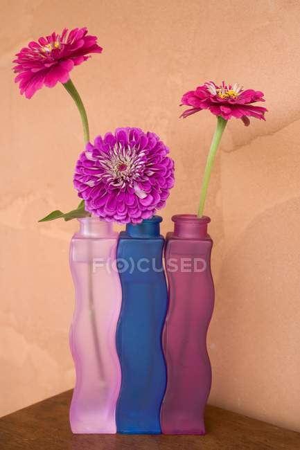 Zinnia flowers in three colored vases — Stock Photo