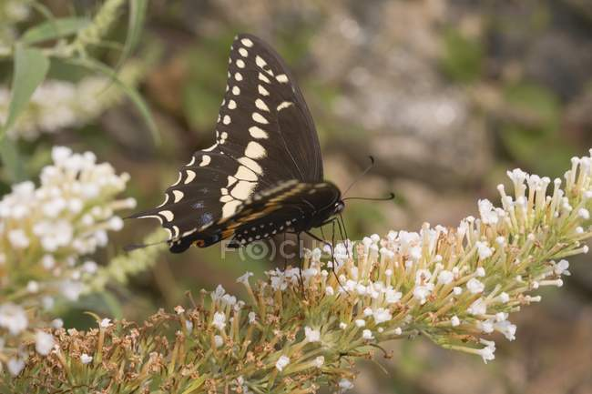 Daytime closeup view of butterfly on lilac flowers — Stock Photo