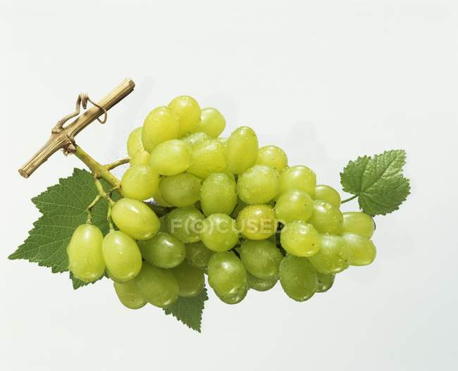 Bunch of Green grapes with leaves — Stock Photo