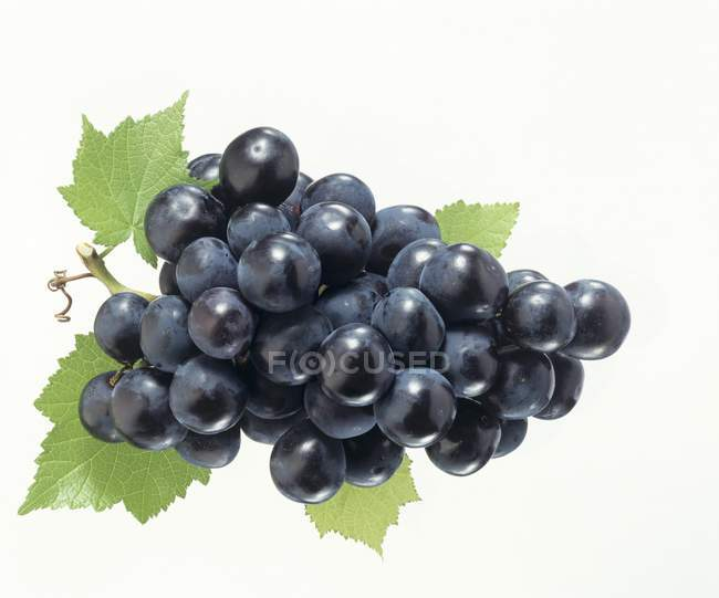 Black grapes with leaves — Stock Photo